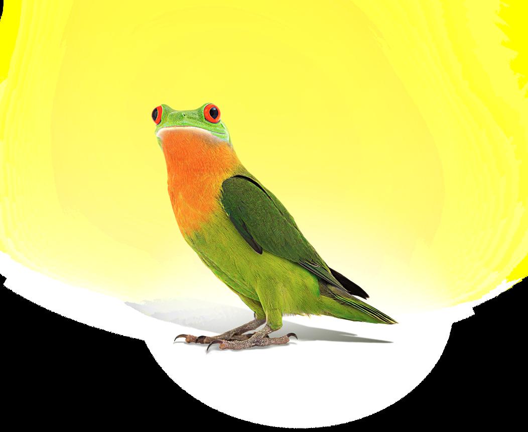 Intro Bird